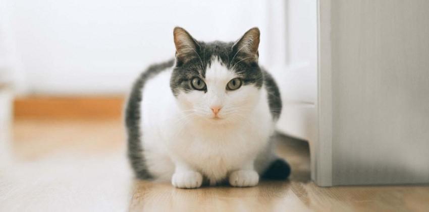 расшифровка биохимического анализа крови у кошек