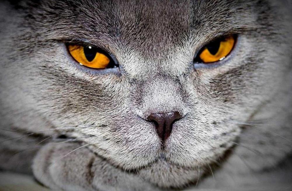 анализ крови мочевина 14 у кота