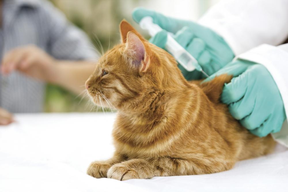 норма сахара в крови у кошек