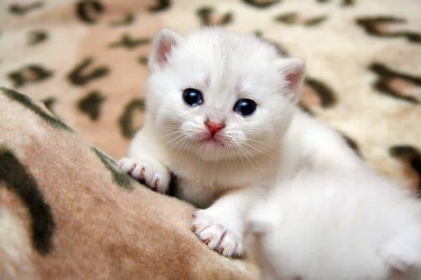 рахит у котенка симптомы