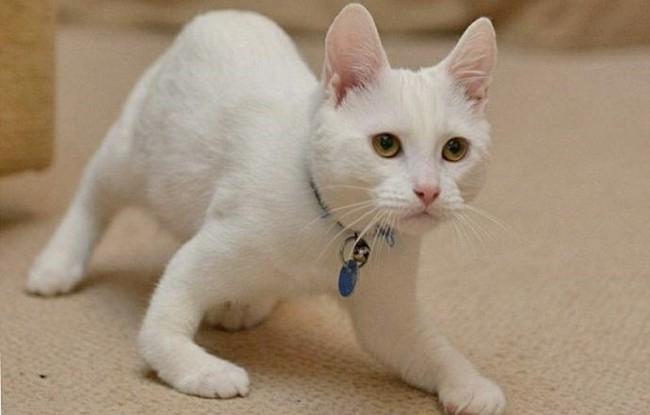 рахит у котят