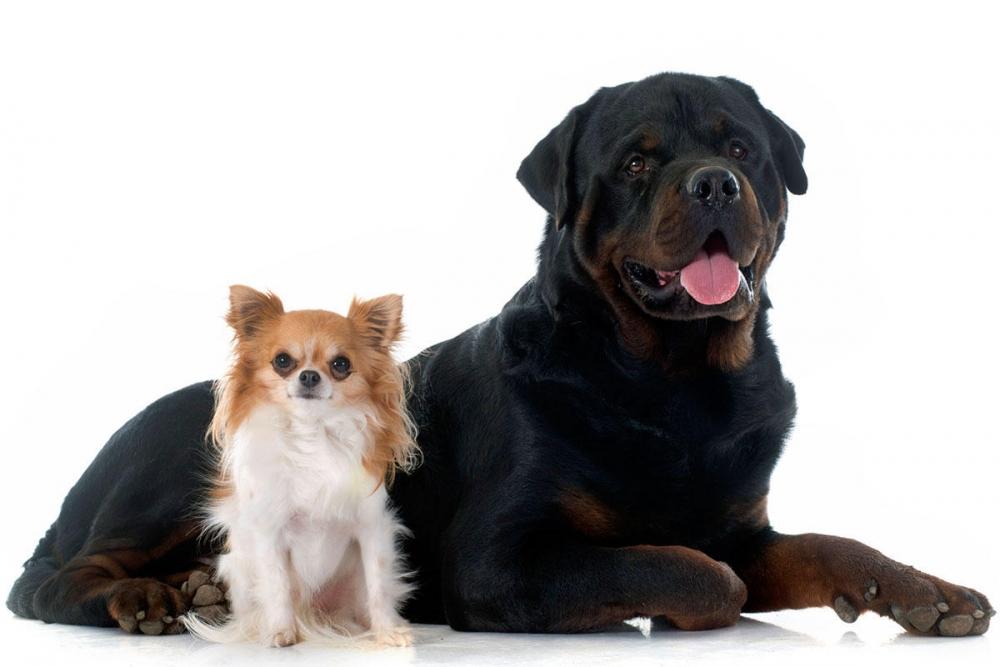 продолжительность жизни собак по породам таблица