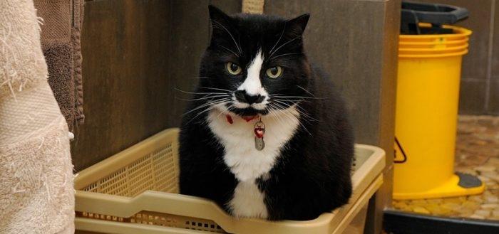 дюфалак для кошек
