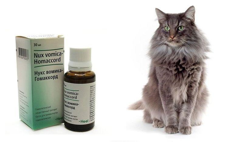 слабительное для кошки в домашних условиях