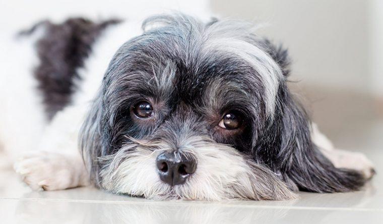 собака много пьет воды и мочится причина