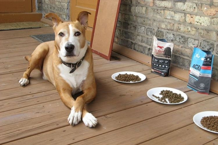 как накормить собаку если она отказывается есть