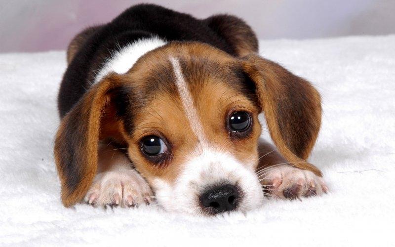 почему собака скулит без причины
