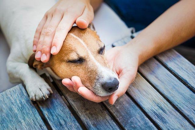 собака часто дышит с открытым ртом