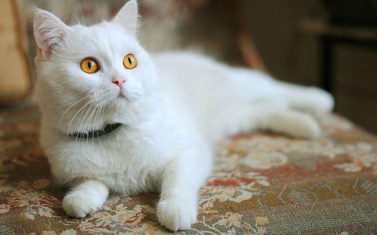 эндоскопическая стерилизация кошек