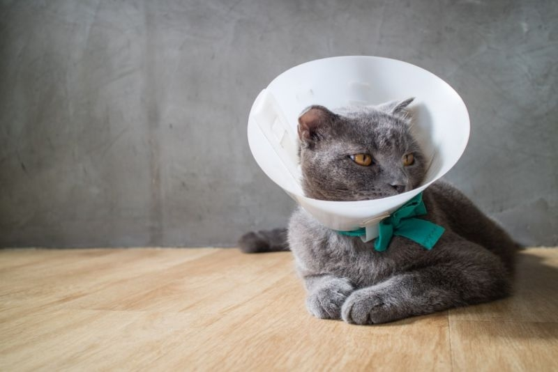 стоматит у кошек фото