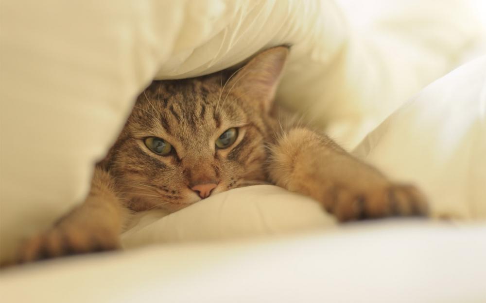 судороги у кота