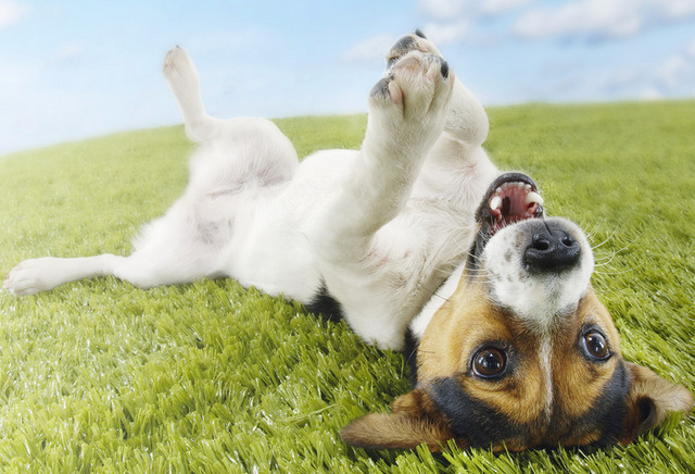глистогонные препараты для собак