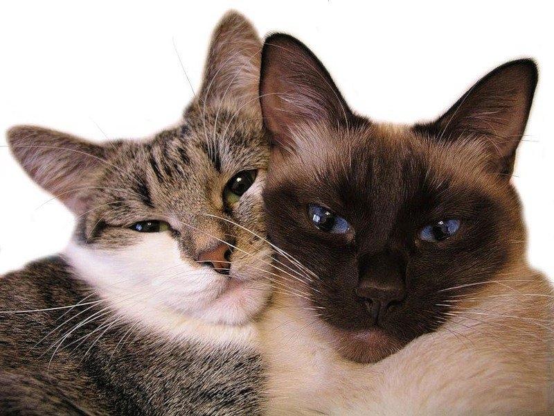 кошка хочет кота как успокоить