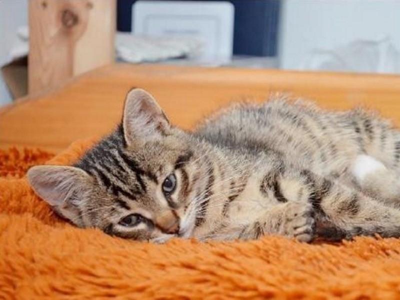 токсокароз у кошек симптомы