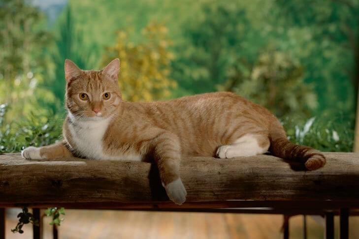 токсоплазмоз симптомы у кошки
