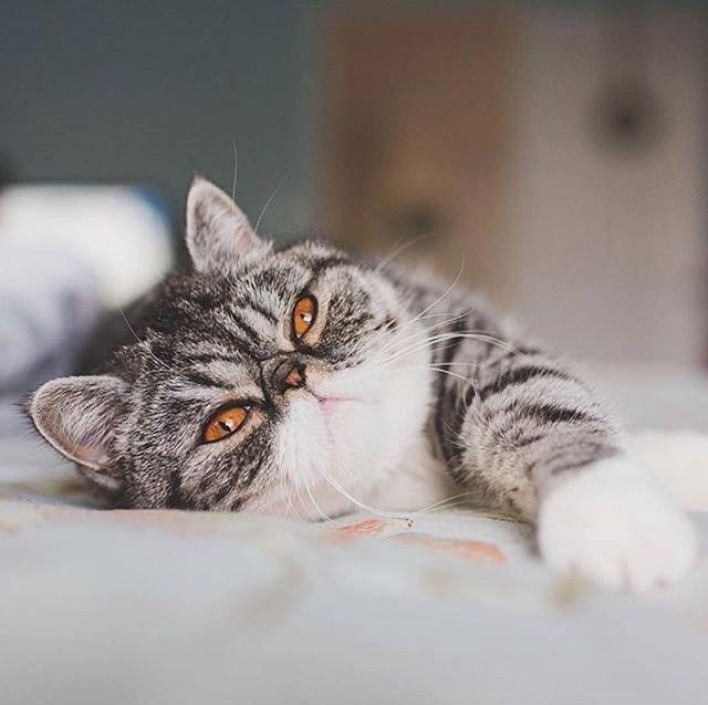 анализ на токсоплазмоз у кошек