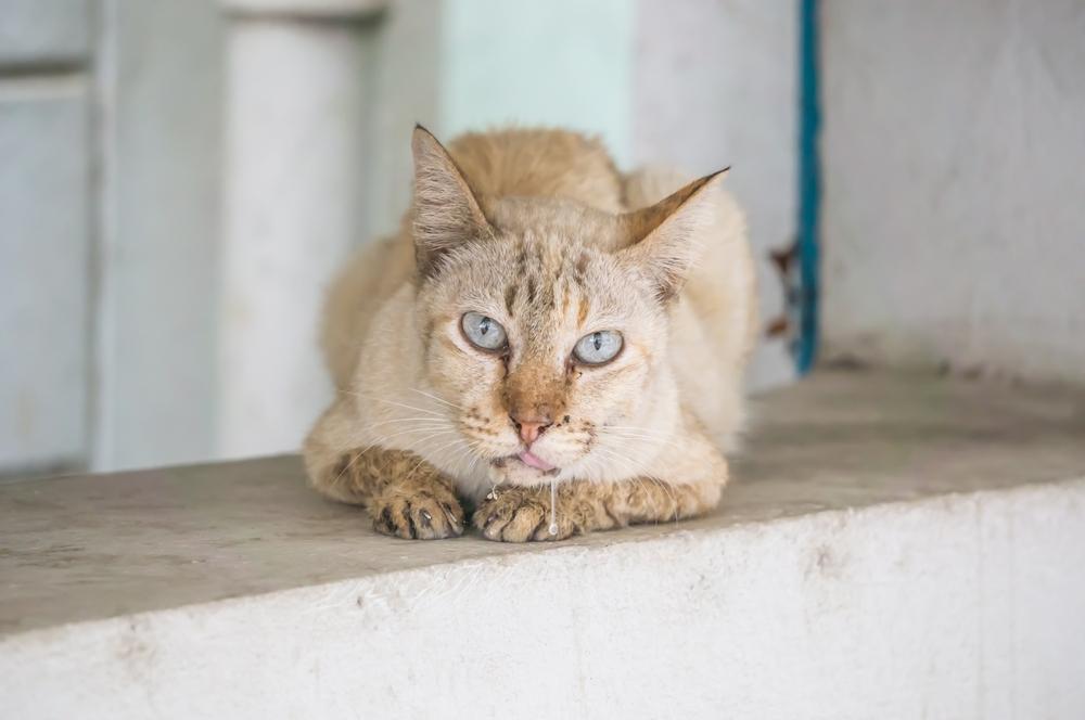 у кота текут слюни прозрачные