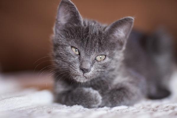 почему у котенка большой живот