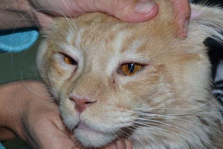 у кота воспалился глаз что делать
