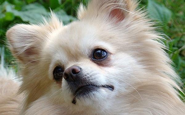у щенка слезятся глаза что делать