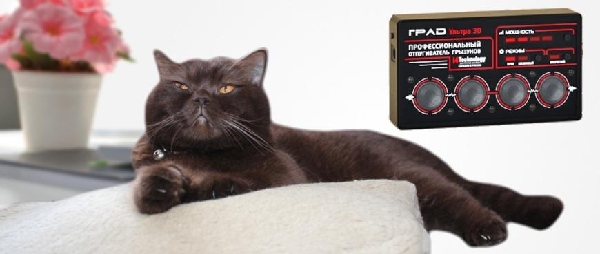 ультразвук для котов