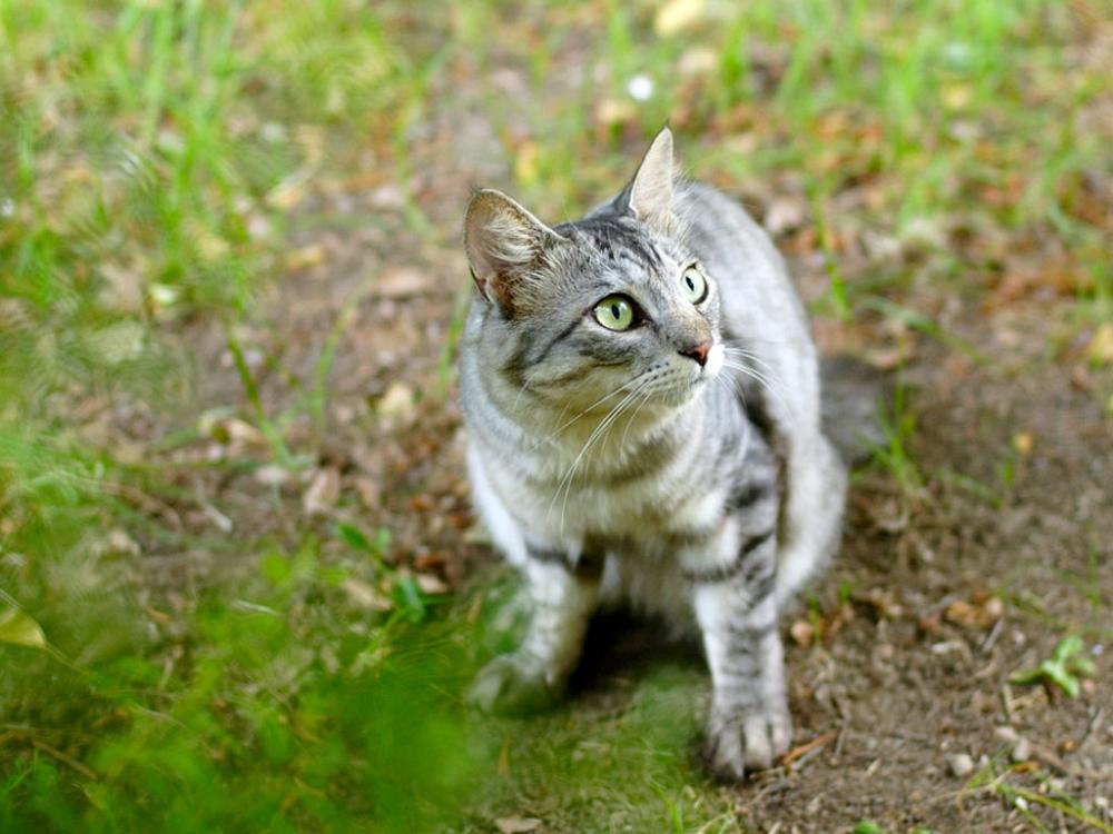 отпугиватель кошек ультразвуковой