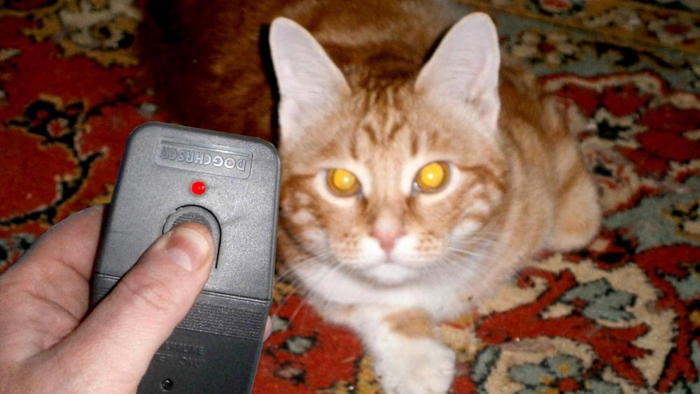 ультразвук для кошек
