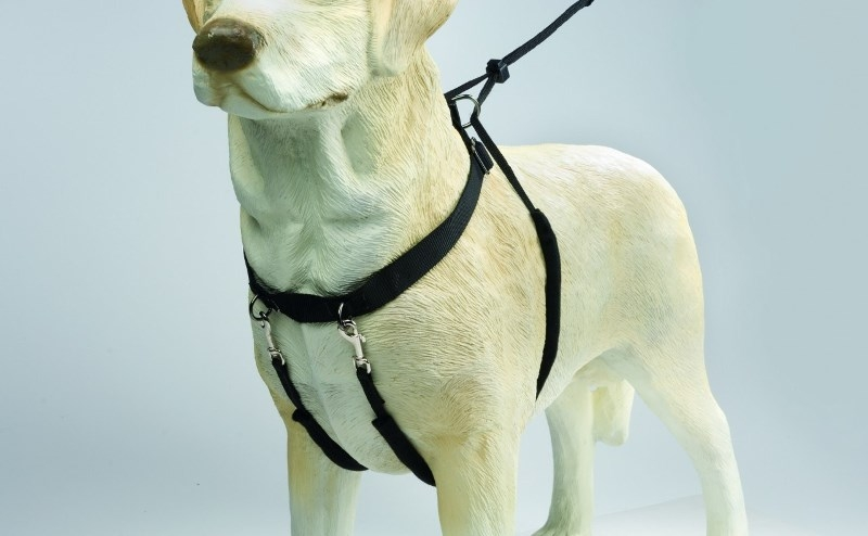 ездовая шлейка для собаки своими руками выкройка