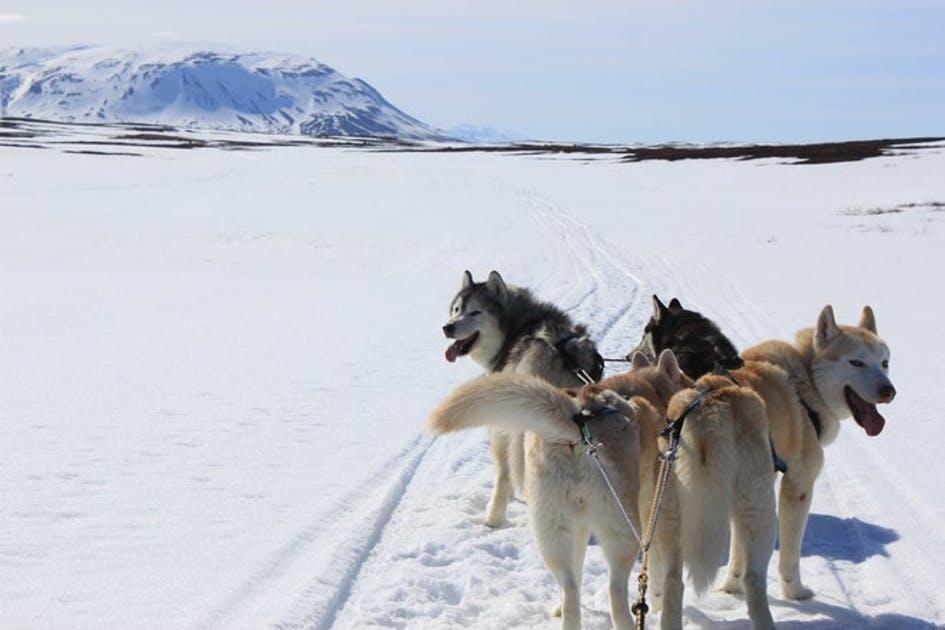 упряжка для собак