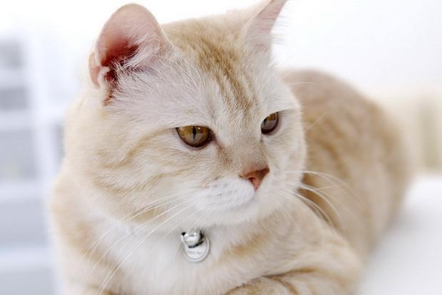 лекарство от ушного клеща у кошек