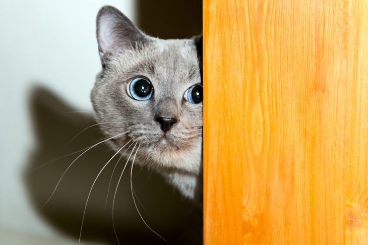 успокоительные капли для кошек