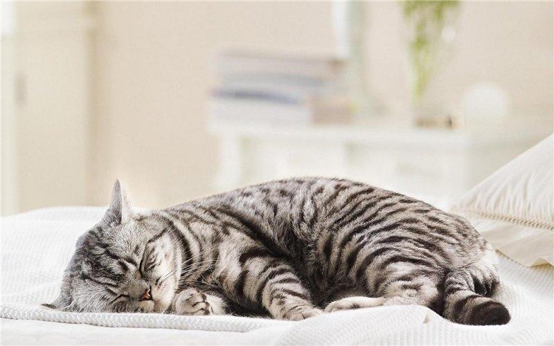 успокоительное для кошек в домашних условиях