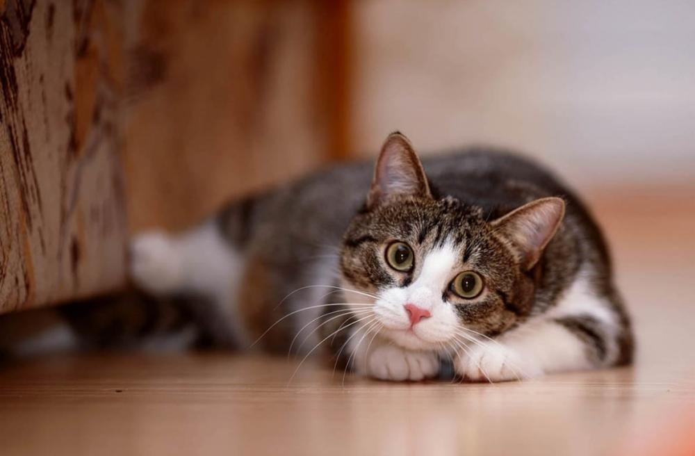 снотворное для кошек для перевозки
