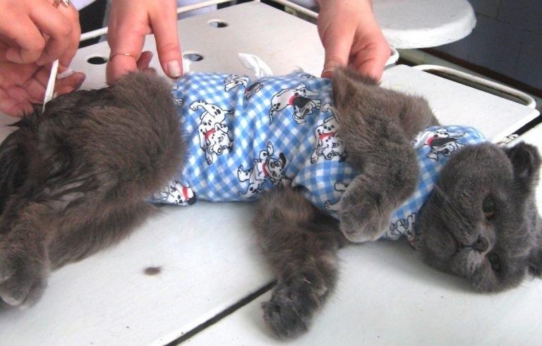 после стерилизации у кошки шишка на животе