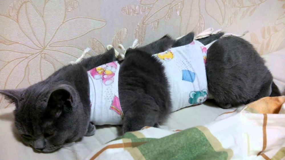 кошка после стерилизации не ест не пьет