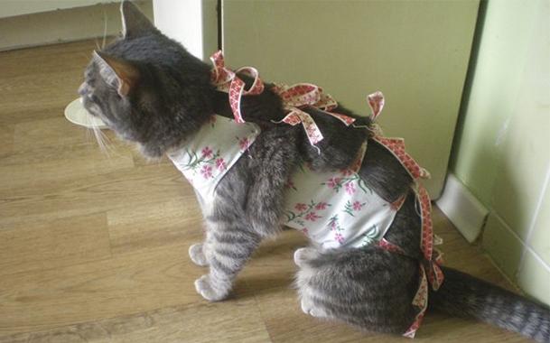 как ведут себя кошки после стерилизации