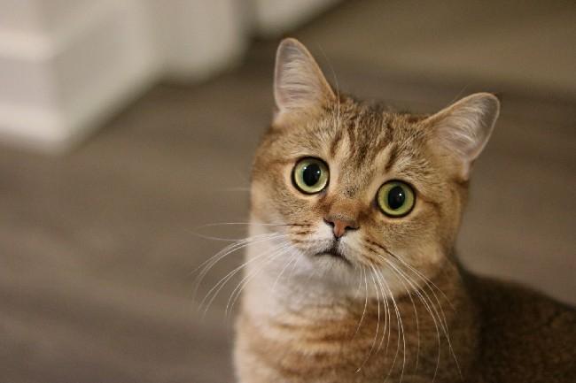 сколько стоит кастрировать кота