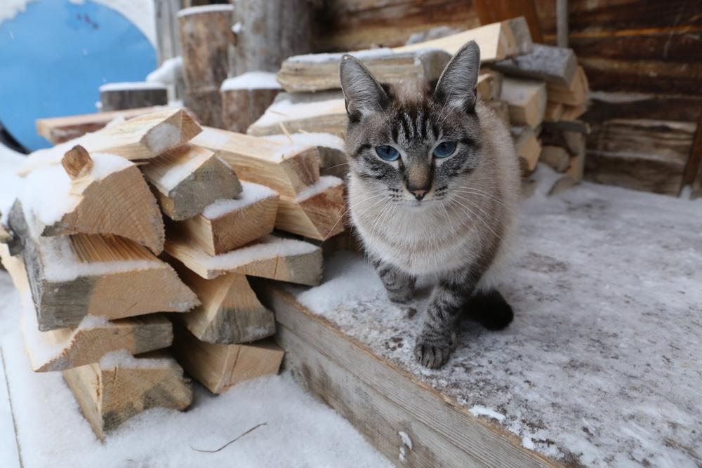 как коты переносят кастрацию
