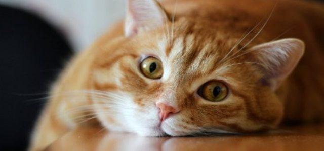 кастрация кота на дому