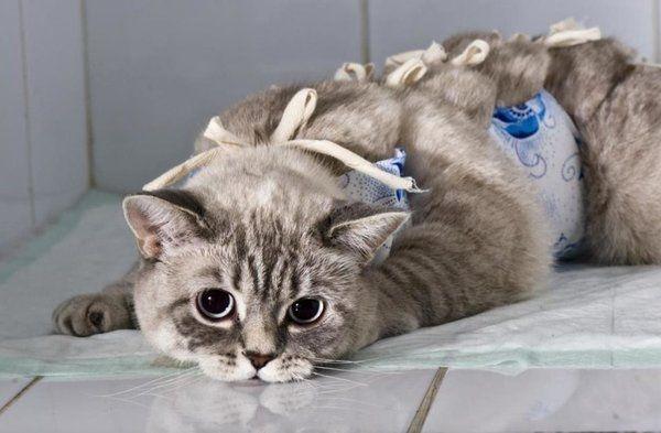 как лучше стерилизовать кошку