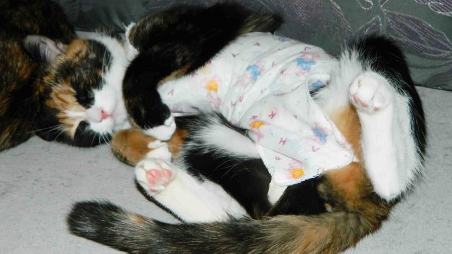 во сколько месяцев можно стерилизовать кошку