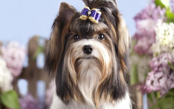 прекращается ли течка у собак после вязки