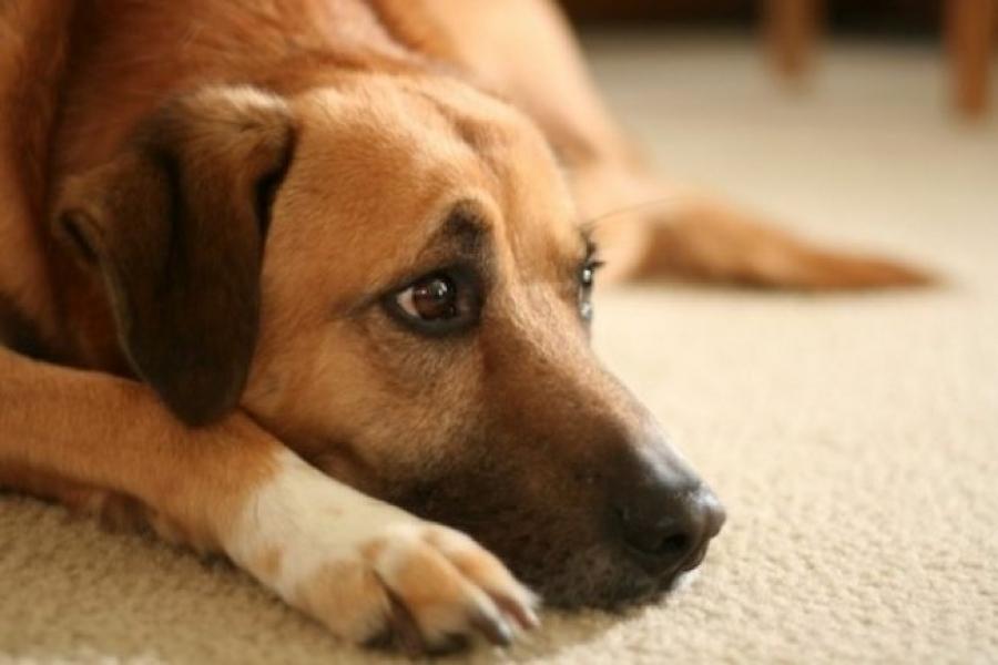 как понять что у собаки началась течка