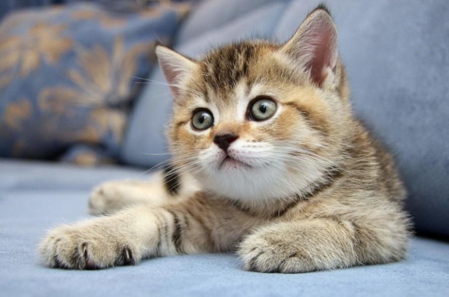 вирусный перитонит у кошек симптомы и лечение