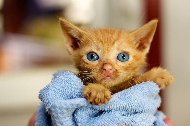 инфекционный перитонит у кошек симптомы