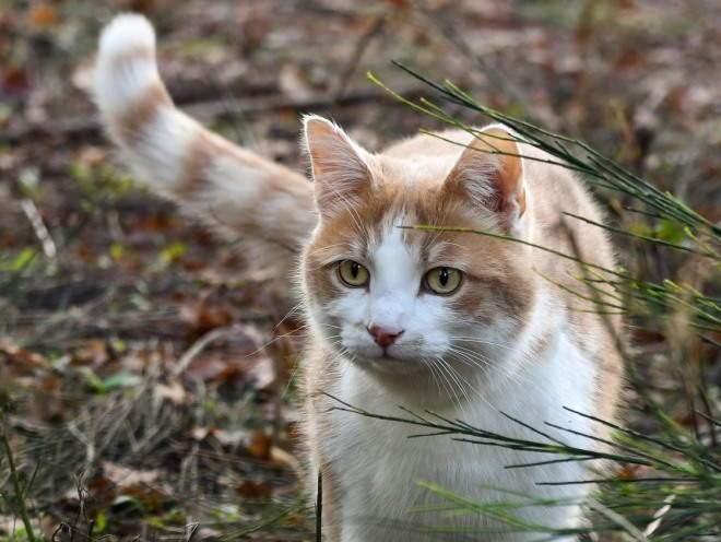 витамины для кошек в каплях