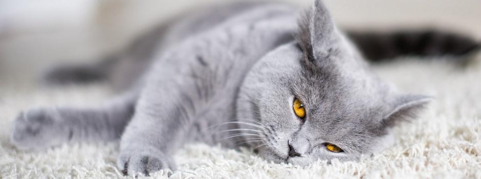 корм для шерсти кошек