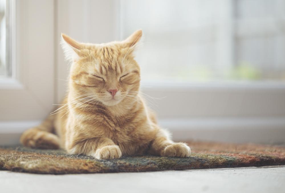 шерстевит для кошек
