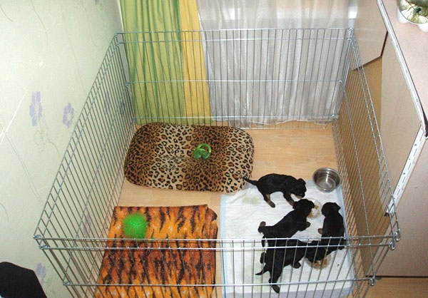 вольеры для маленьких собак в квартиру