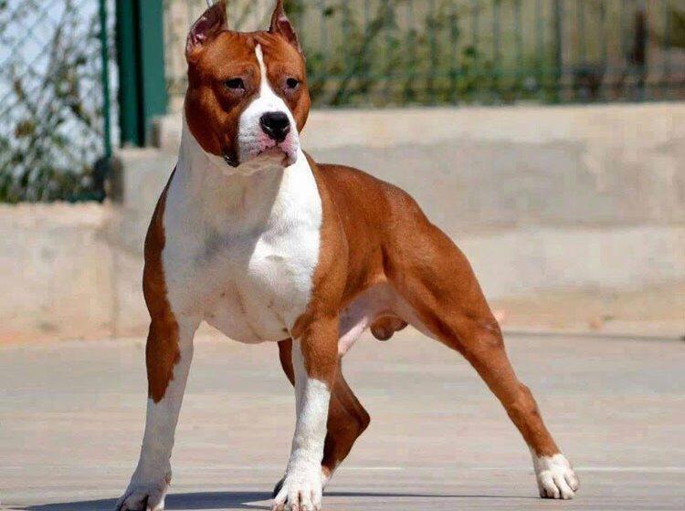 сколько лет собаке по человеческим меркам